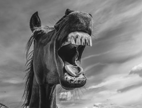 horse panic.jpeg